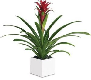 plant gift delivery