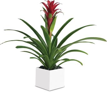 Order Plant Gift Delivery