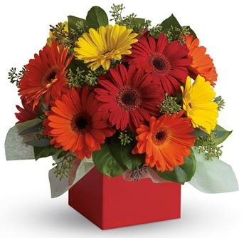 Send Flowers To Apologize